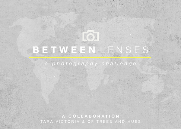 Between Lenses with Tara Victoria & Of Trees and Hues